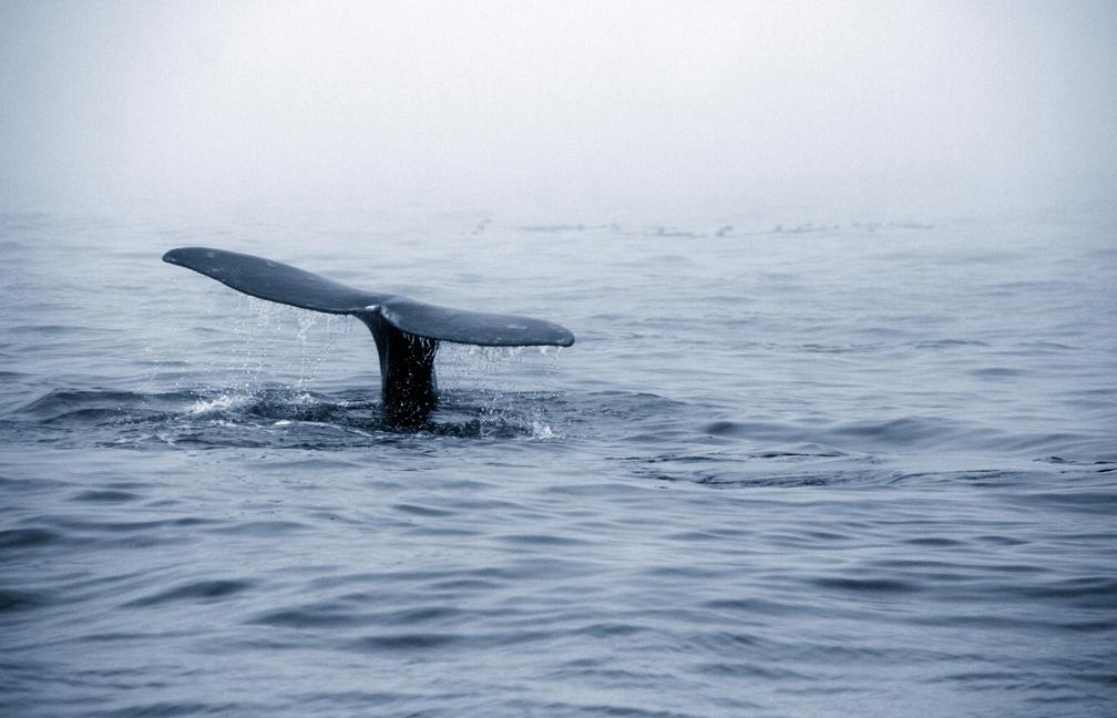 Whale watching, Tofino, B.C.